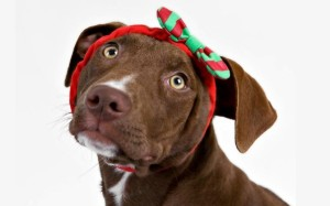 ChristmasDog_Headband