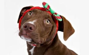 ChristmasDog_Headband