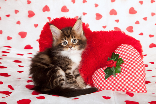 Valentine Cover Photos With Dogs And Cats