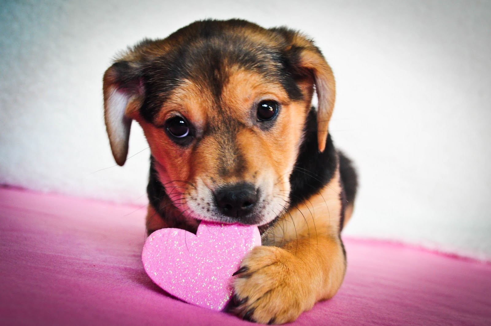 5 things to do this valentine s day chicago planner magazine - Valentines day pictures with puppies ...