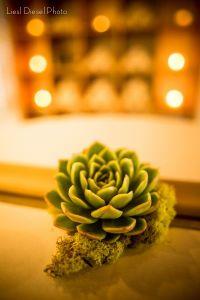 Long-Lasting Flowers, Photo by LieslDiesel Ph0to